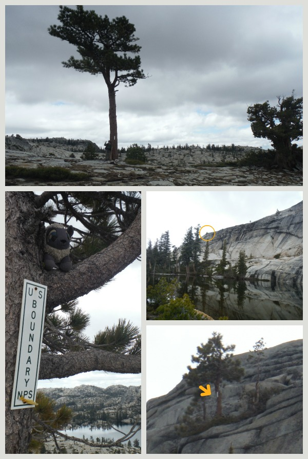 Northern Yosemite Boundaries
