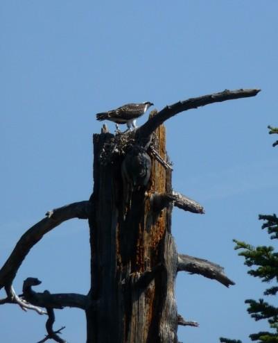Rubicon Osprey