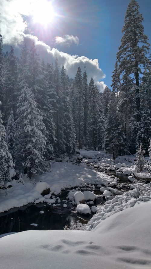 Kaweah River in Winter