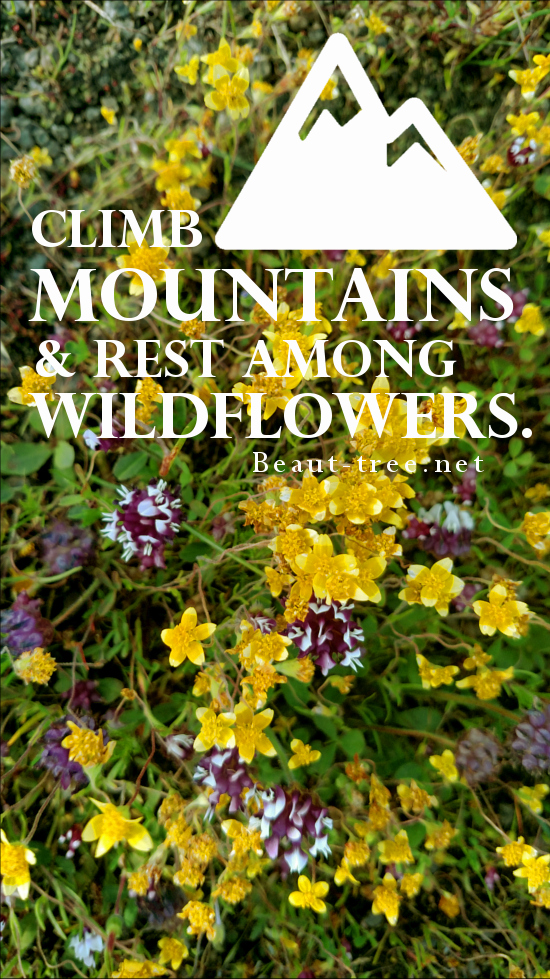 All I want to do is climb mountains and rest among wildflowers