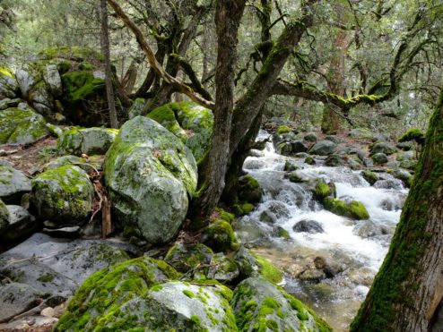 Kibbie Creek Falls